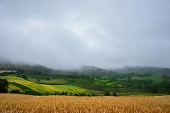 just nature (Zlatko Vickovic) Tags: landscape nature novisad vojvodina fruska gora serbia zlatkovickovicphotography zlatkovickovic fog hills