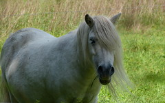 You have to eat your vegetables (joeke pieters) Tags: 1360062 panasonicdmcfz150 paard pony horse