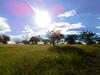 pasto1 (yajat54) Tags: nogales sonora picnic terrenos cabañas cabins nature naturaleza