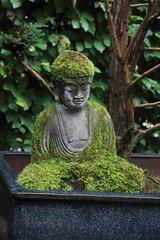 036A3528 (zet11) Tags: ogrody tematyczne hortulus dobrzyca garden plant flower water chinese bridge