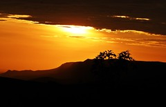 São João Batista da Serra da Canastra1 (Conexão Selvagem) Tags: observaçãodeaves serra canastra parque nacional cerrado aves bird wildlife galito rapina gavião