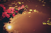 Flowers and lillies (koribrus) Tags: koribrus nikonfe film photography nikon lens filmisnotdead korean korea kori focus color 35mm prime colour manual redscale 2017 ais ai brus fe believeinfilm nikkor may analog kodak filmphotography manualfocus