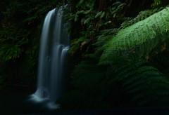 Great Otway National Park_00016 (moniq84) Tags: great national park green leaves water watrfalls dark australia south oceania long exposure otway victoria rainforest nature naturephotography longexposure nikon sigma waterfall waterfalls
