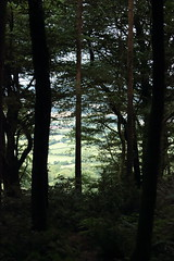 Through the trees (SarahPaigexx) Tags: firebeaconhill easthill devon forest walk view nature landscape flowers closeup pretty summer sun trees