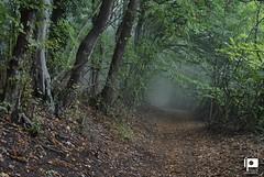 Kalnik (Ivica Pavičić) Tags: kalnik croatia mist trees