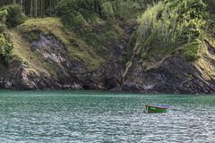 Green nature (ninestad) Tags: