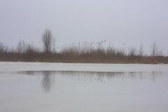 thaw II (Mindaugas Buivydas) Tags: lietuva lithuania color winter february sadnature minimal minimalism thaw ice kuršiųmarios curonianlagoon reflection mindaugasbuivydas