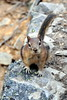 Golden-mantled ground squirrel, Moraine Lake (Sandro Helmann) Tags: morainelake squirrel esquilo banff