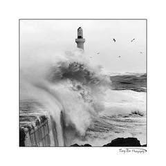 The Wave BW_5430 (The Terry Eve Archive) Tags: aberdeenharbour storm battering waves wild weather stormforce gulls seagulls