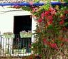 Balcón (camus agp) Tags: pueblos balcones flores bougainvilleas fachadas marbella españa