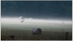 Chevreuil in the mist (Wilco1954) Tags: earlymorning france cotedor chateaneuf dawn mist deer burgundy brume bourgogne chevreuil haystacks