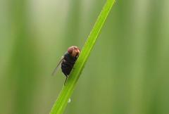IMG_7954 (mohandep) Tags: madivala puttenahalli lakes bangalore nature wildlife insects birds flowers