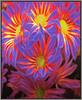 (Cliff Michaels) Tags: iphone iphone6 photoshop pse9 kroger flowers flora blossoms petals