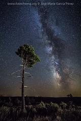 Soledad (fotochemaorg) Tags: airelibre árbol azul bosque cielo estrellas guadalajara losartesones mazarete noche nocturna paisaje pino víaláctea