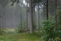 Forêt mystique (RIch-ART In PIXELS) Tags: alsace lesvosges france forest pineforest fog mist leicadlux6 leica dlux6 aubure
