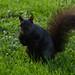 Squirrel in Stanley Park, Vancouver