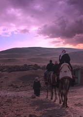 (instagram: @zataom) Tags: sunset sunsets sky clouds camels photography photographer canon photo photograph landscape portrait portraits sun dslr digital desert travel egypt giza horizon