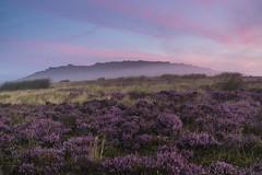 Purple Haze (l4ts) Tags: landscape derbyshire peakdistrict darkpeak goldenhour sunrise stanageedge mist heather moorland gritstoneedge appicoftheweek