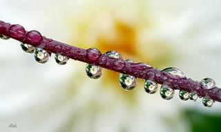 Floral Fun In The Rain (1)