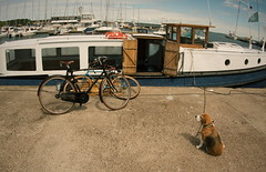 Doggie (empty.and.void) Tags: nida nidden neringa curonianspit curonianlagoon kuršiųnerija kurischenehrung klaipėdosapskritis balticsea ostsee lithuania lietuva lt smallcreatures fisheye boat sailboat bike dog animalphotography distorted landscapephotography distortion agameoftones summervibes animalphoto artofvisuals wanderlust thegreatoutdoors stayandwander nothingisordinary bikelife pet petphotography wideangle beautifuldestinations streetscape