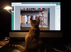 Book End (The Edit Room Version) (Goran Patlejch) Tags: cat apple mac computer photoshop watching patlejch patlejh goenetix gntx display tabby