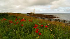 Where wild flowers grow (WISEBUYS21) Tags: stmarys marys lighthouse whitley bay shore sea sand seascape seaside poppy poppies wild flowers red yellow green blue shoreline water northshields northumberland northumbria north tyneside newcastleupontyne horizon grow coastal island clouds grass wisebuys21 near tyneandwear northeastofengland northern landscape perfect picture photo tranquil calm beautiful beach relaxing stunning warning