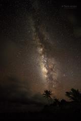 Tropic Night (PIERRE LECLERC PHOTO) Tags: maui hawaii milkyway stars night nightsky palmtrees hana haleakalanationalpark oehogulch sevenpools tropicnight tripocal travel places destinations pierreleclercphotography canon5dsr rokinon14mmf28 mauihawaiihaleakalanationalparksevenpoolsoehogulchstarsmilkywayspaceuniversetropicnightnighttropicalskynightskypierreleclercphotographypalmtrees