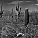 A Parking Lot View from Near to Far (Black & White, Saguaro National Park)