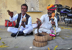 Snake charmers at the street of Jaipur, India (phuong.sg@gmail.com) Tags: adult animal art asia asian basket charmer cobra culture danger east entertainment ethnic ethnicity fakir fife flute hand hinduism human hypnotist india indian instrument magic magician man men music musical musician people performer performing pets pilgrim play poison poisonous reptile roadside sadhu snake street symbol tourism traditional travel vacation wild