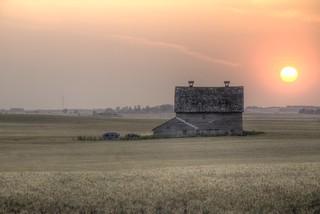 Prairie Beauty