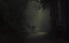 Lurking Shadows (Netsrak) Tags: trettachtal bayern oberstdorf alpen baum bäume wald nebel mist fog natur landschaft pfad weg waldweg