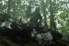 Chewie (nobudius_5192) Tags: chewbacca chewie starwars bikerscout returnofthejedi shfiguarts bandai blackseries hasbro