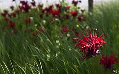 Un rayo de sol... (svet.llum) Tags: flor flores planta verano luz paisaje parque naturaleza moscú rusia