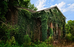 Blossom, and creeper, and weed (Tiigra) Tags: kentucky unitedstates us 2017 architecture column flower nature plant ruin village vine