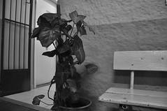 DSC_0038 (medeirosisabel16) Tags: guaratingueta etec school escola peb bw preto branco black white details detalhe banco bench flower vase textures texturas