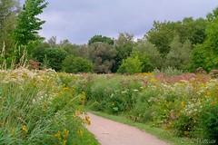 170824-07 Des champs fleuris (clamato39) Tags: fleurs flowers parclessaules villedequébec quebeccity provincedequébec québec canada nature outside ciel sky clouds nuages