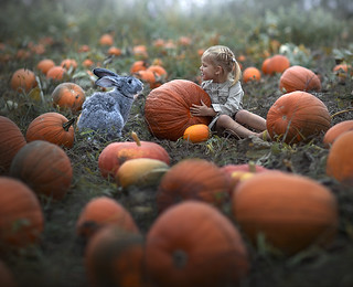 whose pumpkin..?
