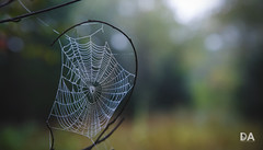 This Tangled Web (Thousand Word Images by Dustin Abbott) Tags: tamronsp2470mmf28divcusdg2 bokeh lens adobelightroomcc review fall 5dmarkiv canoneos5dmarkiv canon5d4 dustinabbottnet alienskinexposurex2 2017 thousandwordimages photography petawawa canada pembroke comparison ontario adobephotoshopcc test 2470g2 cropsensor photodujour dustinabbott ca spiderweb waterdroplets