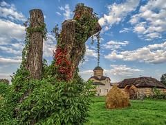 ivy (2) (Luana 0201) Tags: ivy curteadomneasca romania curteadearges bisericadomneascăsfântulnicolae royalchurch
