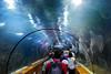 Oceanografic Valencia - Spain. (hanna_astephan) Tags: valencia spain spagna spanya marinelife underwater people travel tourism oceanografic catalonia