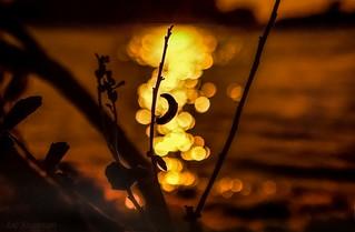 Glittering Bokeh Silhouette at Anclote Beach