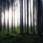 A Forest thumbnail