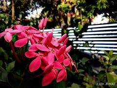 #MobilePhotography #HTC #13MP #IAMRINAF (I AM RINAF) Tags: mobilephotography htc iamrinaf 13mp