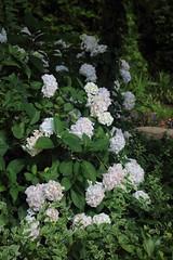 036A3561 (zet11) Tags: ogrody tematyczne hortulus dobrzyca garden plant