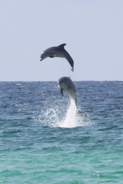 Dolphins are awesome.