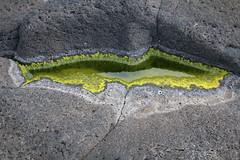 Tidepoolette (hó) Tags: tidepool water rock green seaside abstract nature iceland básendar august 2017