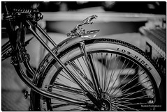 SEPTEMBER 2017 NGM_5448_2024-222 (Nick and Karen Munroe) Tags: bicycle bike lowrider lowriders chrome chromed chromedsteel spokes tires jaguar jag fenders fender beauty brampton beautiful brilliant blackandwhite bw blackwhite bandw munroedesignsphotography munroedesigns munroephotography munroe monochrome mono nikon nickmunroe nickandkarenmunroe nickandkaren nick nikond750 d750 nikon50f14g nikon50f14afsg 50 niftyfifty karenick23 karenick karenandnickmunroe karenmunroe karenandnick karen poweradecentre prostateawareness canada ontario outdoors ontariocanada bokeh