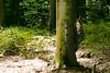 Waldfotosession Detail (christina chouette) Tags: wald christina