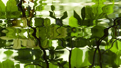 Reflections in Palace park (Mona_Oslo) Tags: royalpalacegarden slottsparken pond reflections green leaf water palacepark oslo monajohansson norwegian