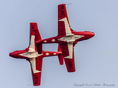 Bottom side pass (david g schultz) Tags: 08112017 abbotsford airplane d810 nikkor nikon nikonsigma sigma aircraft outdoor vehicle bottomsidepass snowbirds nikonafs283003556gedvr 150600mmf563dgoshsm|c davidschultzphotography